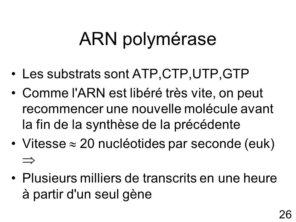 ARN polymérase Les substrats sont ATP,CTP,UTP,GTP