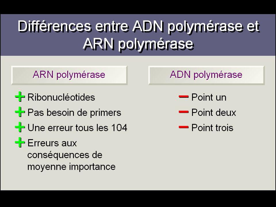 Différences entre ADN polymérase et ARN polymérase