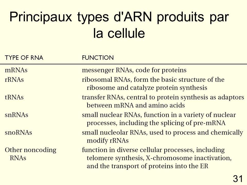 Principaux types d ARN produits par la cellule