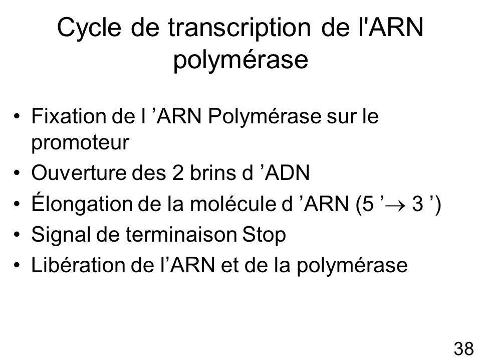 Cycle de transcription de l ARN polymérase