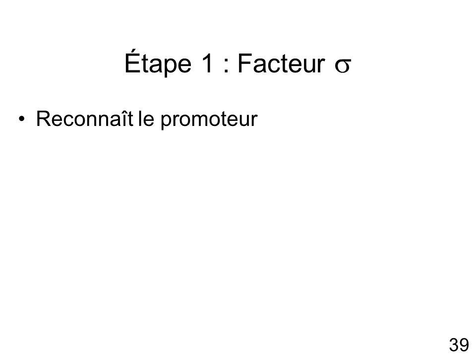 Étape 1 : Facteur  Reconnaît le promoteur #4p306