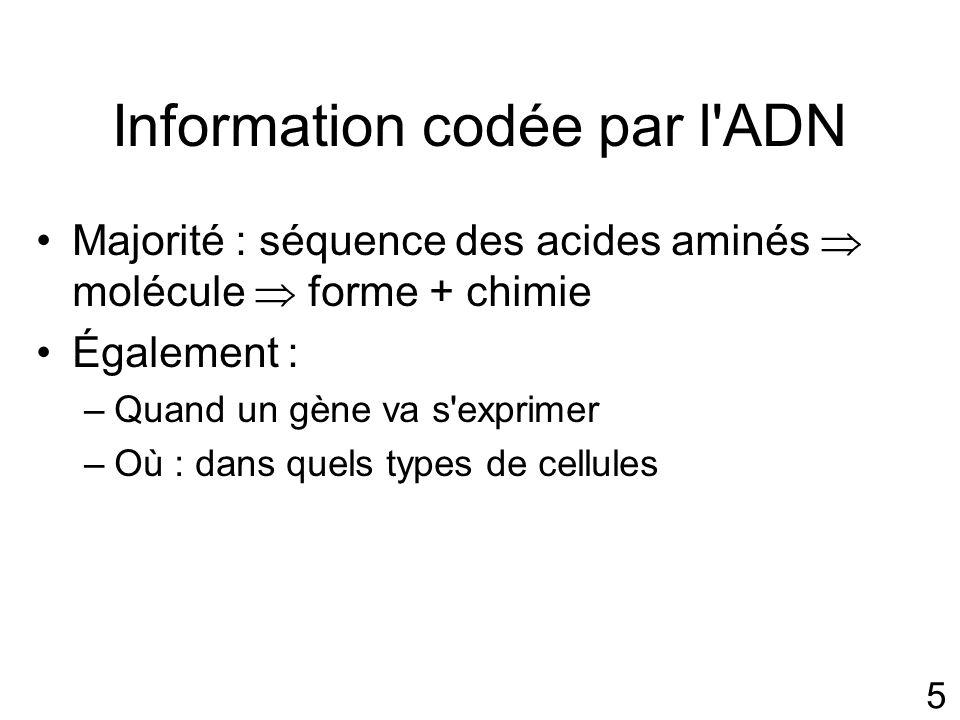 Information codée par l ADN