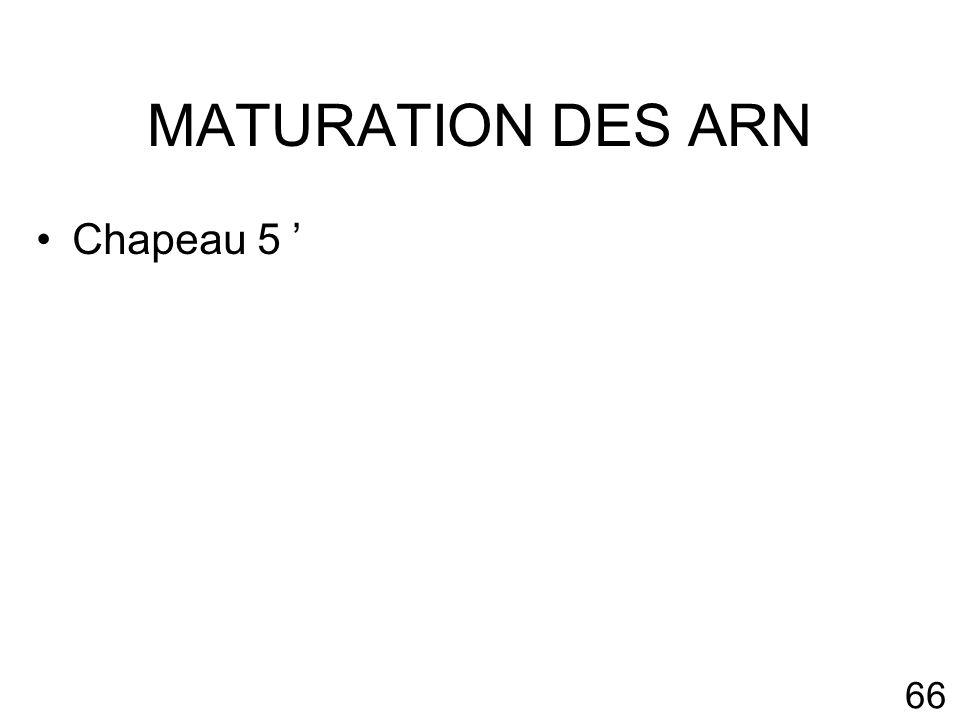 MATURATION DES ARN Chapeau 5 '