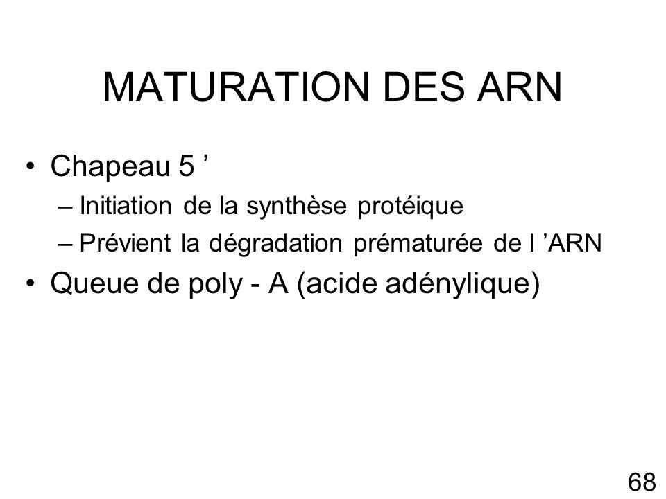 MATURATION DES ARN Chapeau 5 ' Queue de poly - A (acide adénylique)
