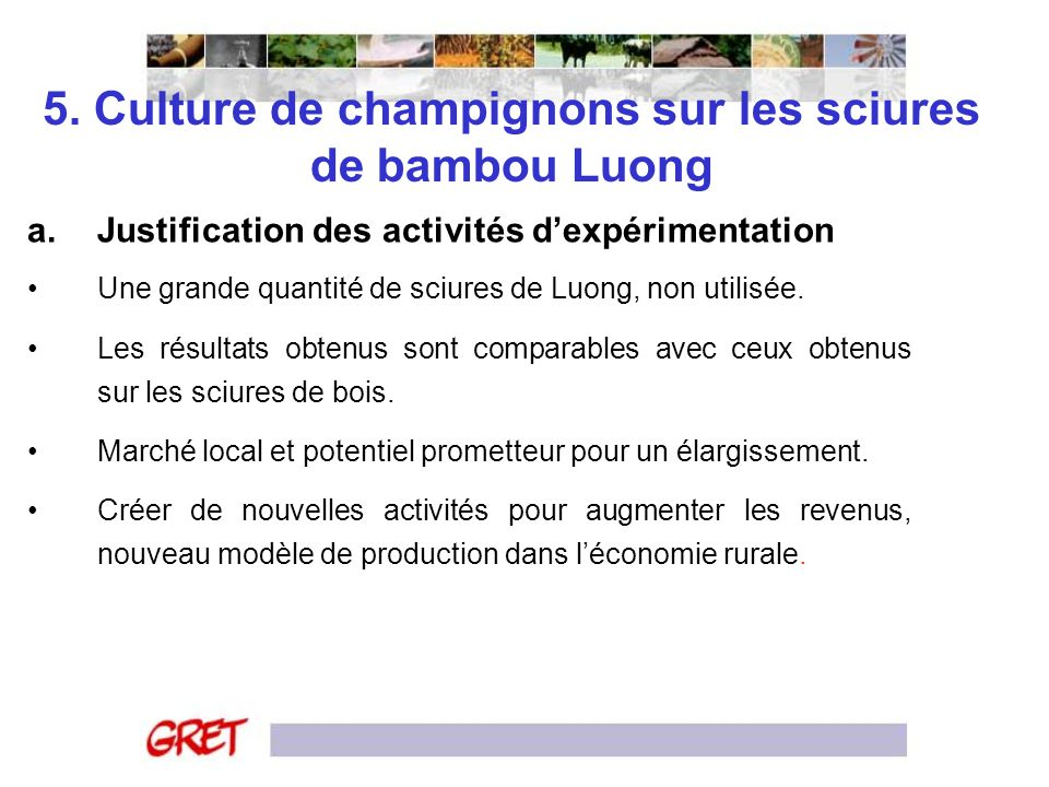 5. Culture de champignons sur les sciures de bambou Luong