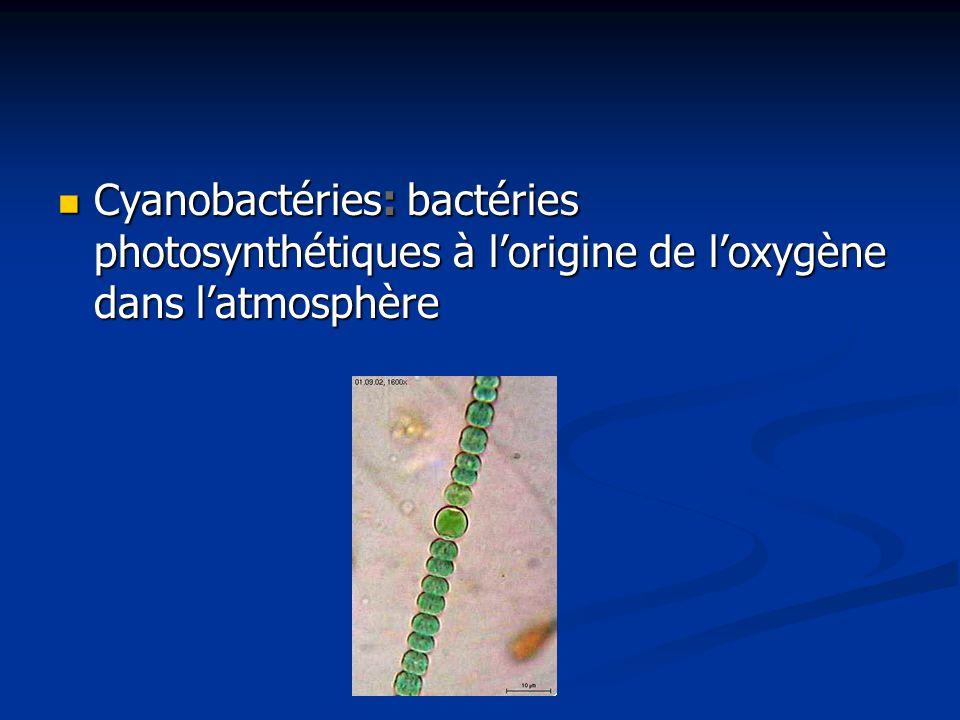Cyanobactéries: bactéries photosynthétiques à l'origine de l'oxygène dans l'atmosphère