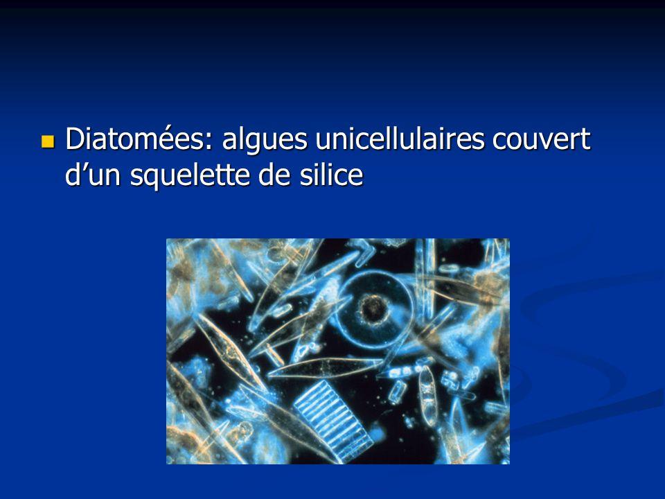 Diatomées: algues unicellulaires couvert d'un squelette de silice