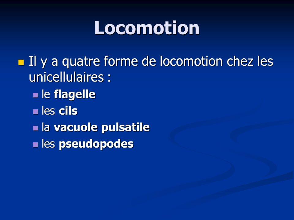 Locomotion Il y a quatre forme de locomotion chez les unicellulaires :