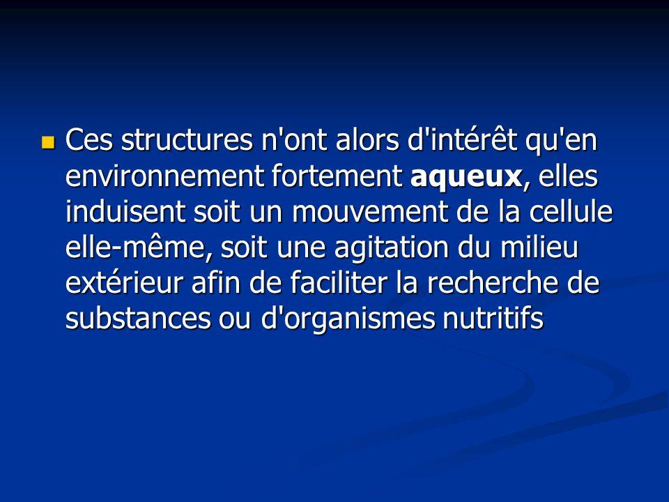 Ces structures n ont alors d intérêt qu en environnement fortement aqueux, elles induisent soit un mouvement de la cellule elle-même, soit une agitation du milieu extérieur afin de faciliter la recherche de substances ou d organismes nutritifs