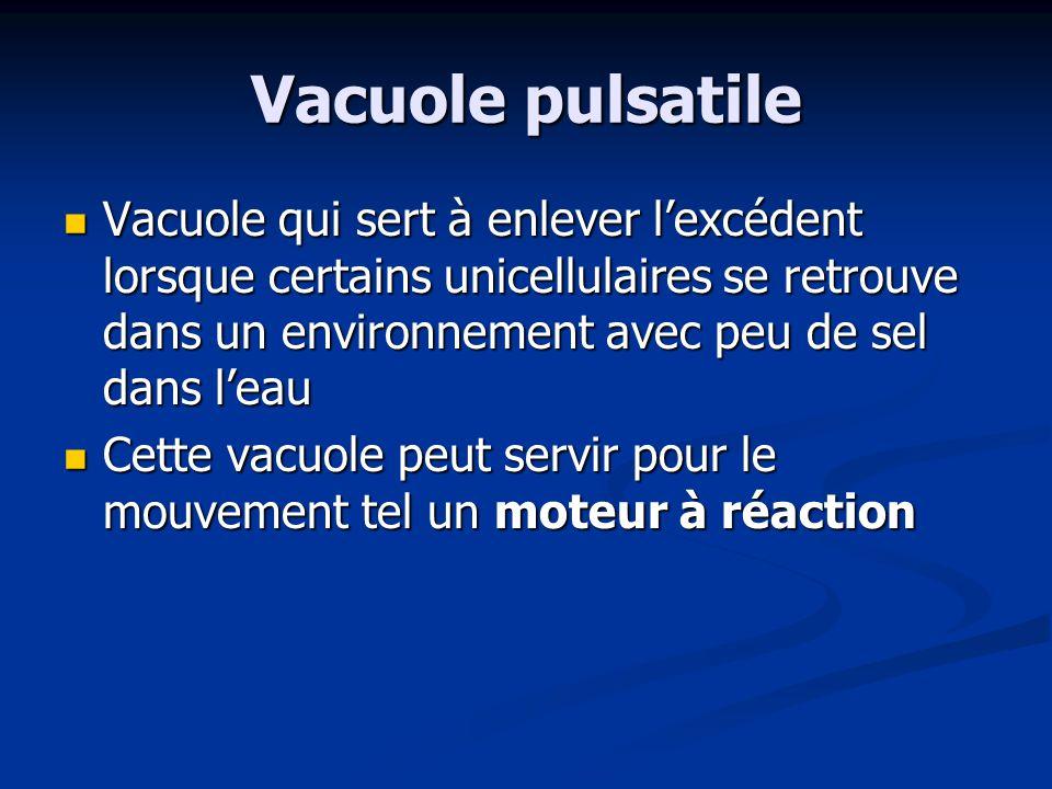 Vacuole pulsatile Vacuole qui sert à enlever l'excédent lorsque certains unicellulaires se retrouve dans un environnement avec peu de sel dans l'eau.