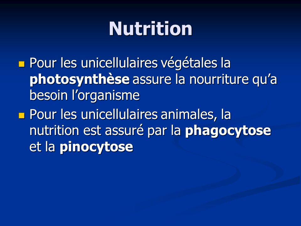 Nutrition Pour les unicellulaires végétales la photosynthèse assure la nourriture qu'a besoin l'organisme.