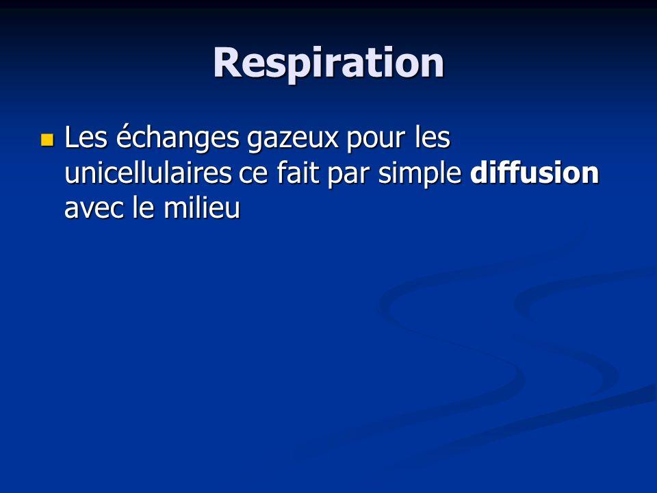 Respiration Les échanges gazeux pour les unicellulaires ce fait par simple diffusion avec le milieu