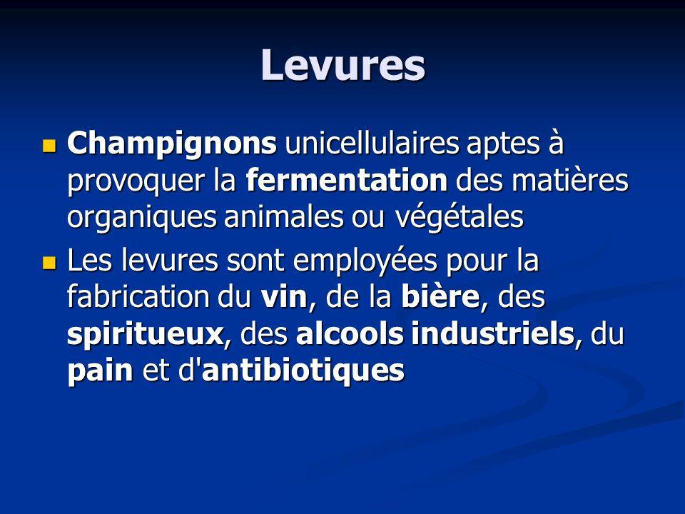 Levures Champignons unicellulaires aptes à provoquer la fermentation des matières organiques animales ou végétales.