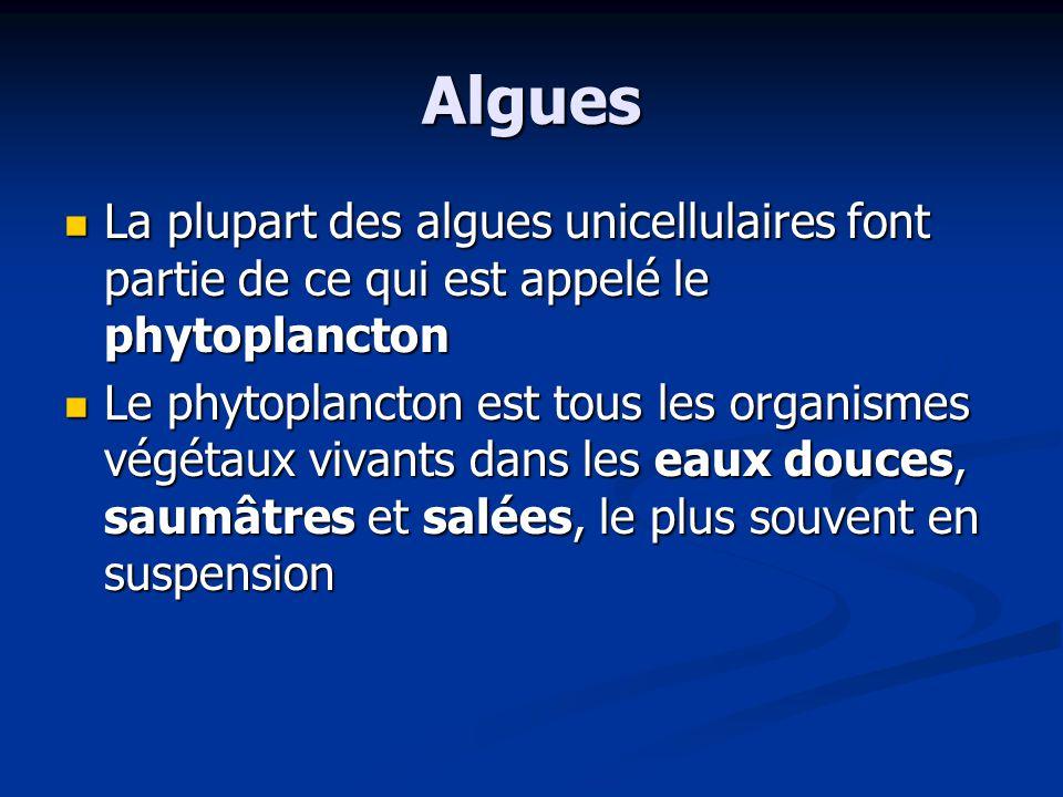 Algues La plupart des algues unicellulaires font partie de ce qui est appelé le phytoplancton.