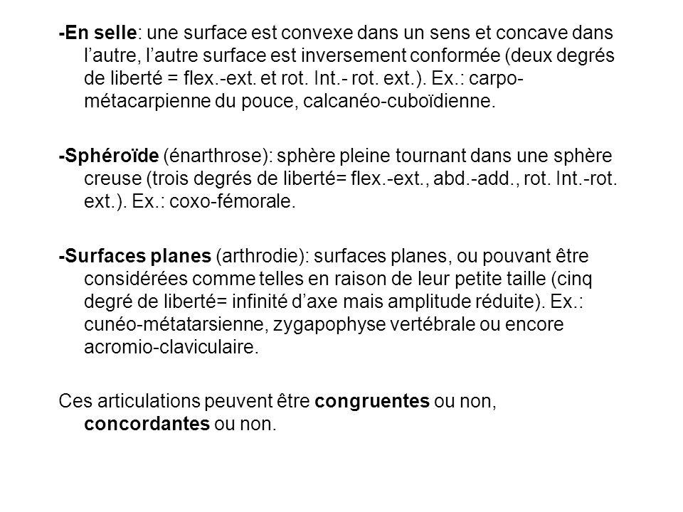 -En selle: une surface est convexe dans un sens et concave dans l'autre, l'autre surface est inversement conformée (deux degrés de liberté = flex.-ext. et rot. Int.- rot. ext.). Ex.: carpo-métacarpienne du pouce, calcanéo-cuboïdienne.
