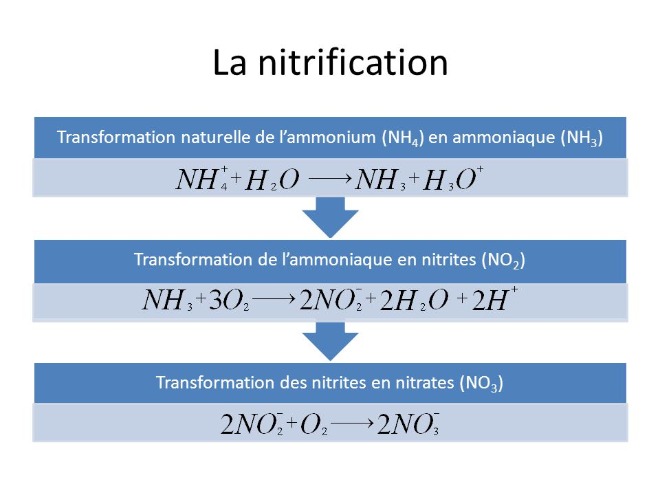 La nitrification Transformation naturelle de l'ammonium (NH4) en ammoniaque (NH3) Transformation de l'ammoniaque en nitrites (NO2)