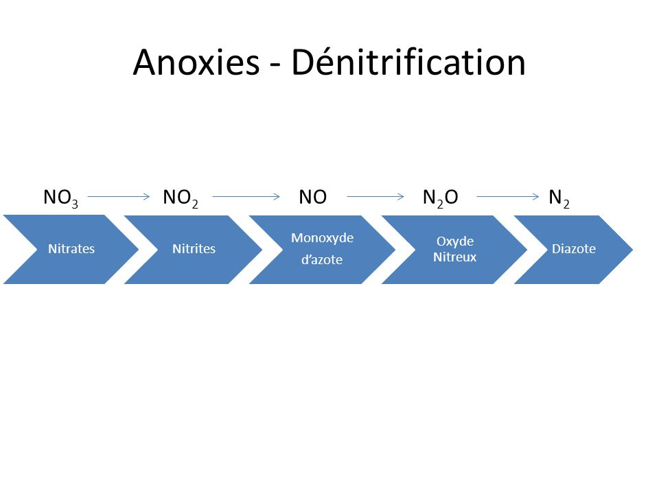 Anoxies - Dénitrification
