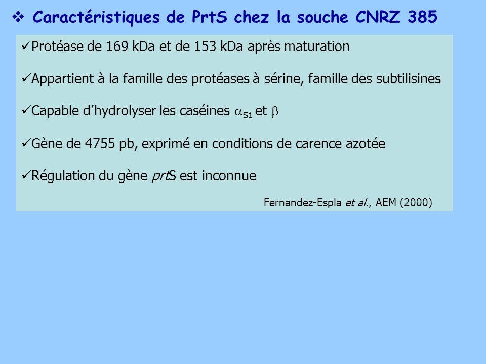 Caractéristiques de PrtS chez la souche CNRZ 385