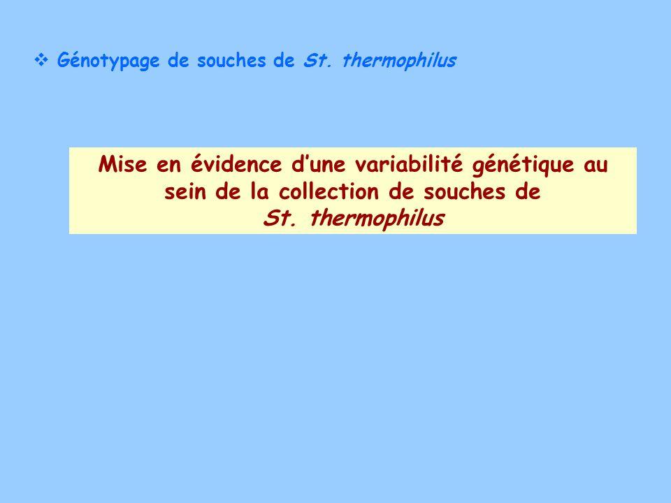Génotypage de souches de St. thermophilus