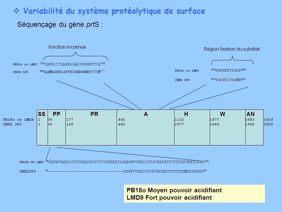 Variabilité du système protéolytique de surface