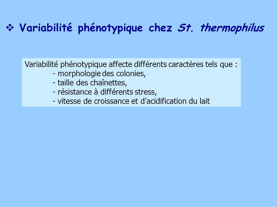 Variabilité phénotypique chez St. thermophilus
