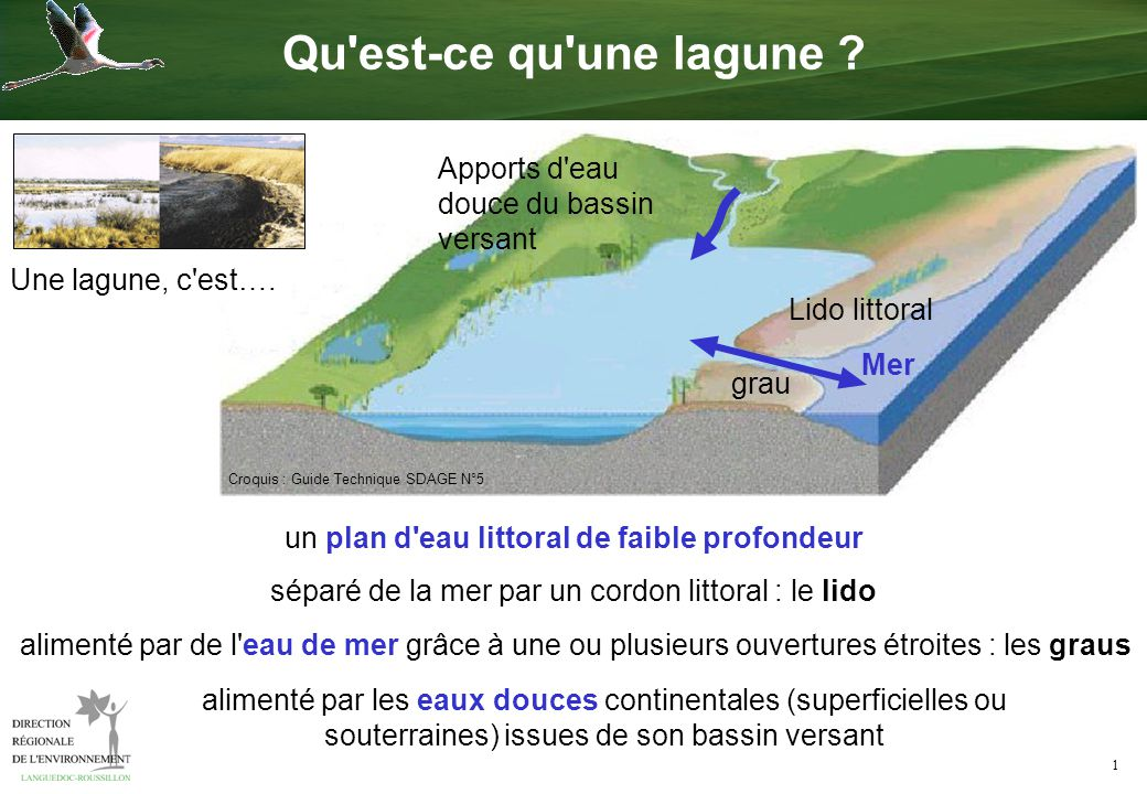 Qu 39 est ce qu 39 une lagune apports d 39 eau douce du bassin versant ppt video online t l charger - Qu est ce qu un plan de coupe ...