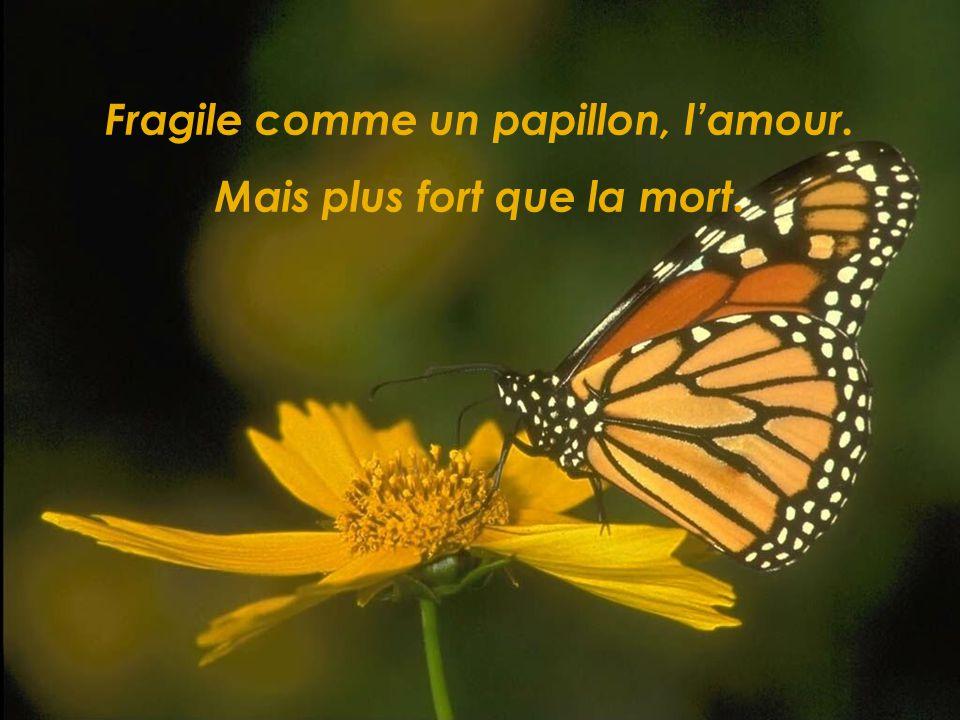 Fragile comme un papillon, l'amour. Mais plus fort que la mort.