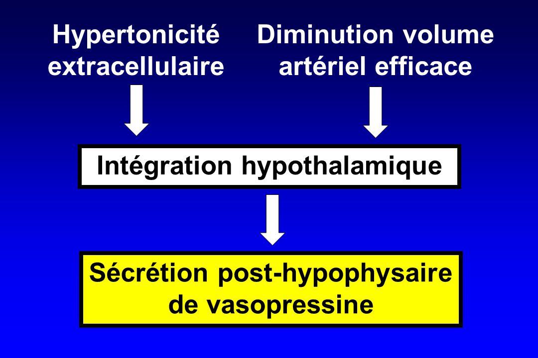 Intégration hypothalamique Sécrétion post-hypophysaire