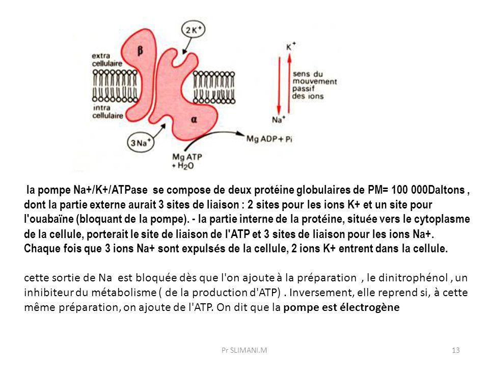 la pompe Na+/K+/ATPase se compose de deux protéine globulaires de PM= 100 000Daltons , dont la partie externe aurait 3 sites de liaison : 2 sites pour les ions K+ et un site pour l ouabaïne (bloquant de la pompe). - la partie interne de la protéine, située vers le cytoplasme de la cellule, porterait le site de liaison de l ATP et 3 sites de liaison pour les ions Na+. Chaque fois que 3 ions Na+ sont expulsés de la cellule, 2 ions K+ entrent dans la cellule.