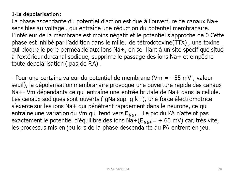 1-La dépolarisation :