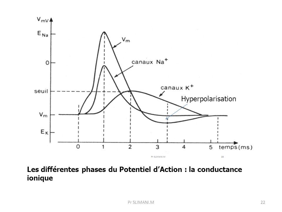Les différentes phases du Potentiel d'Action : la conductance ionique
