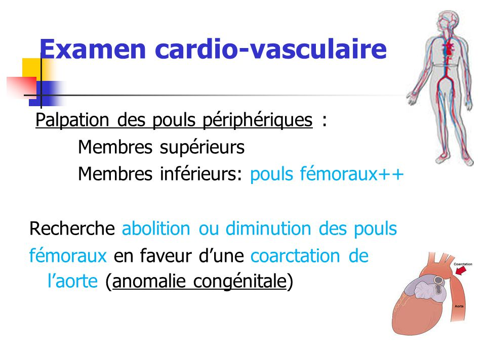 Examen cardio-vasculaire
