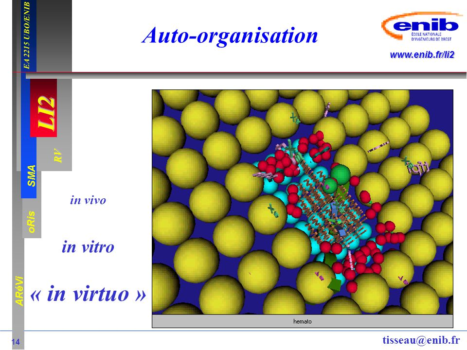 Auto-organisation « in virtuo »