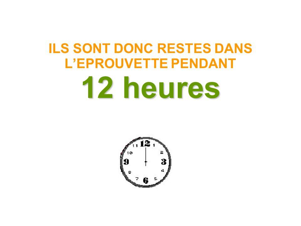 ILS SONT DONC RESTES DANS L'EPROUVETTE PENDANT 12 heures