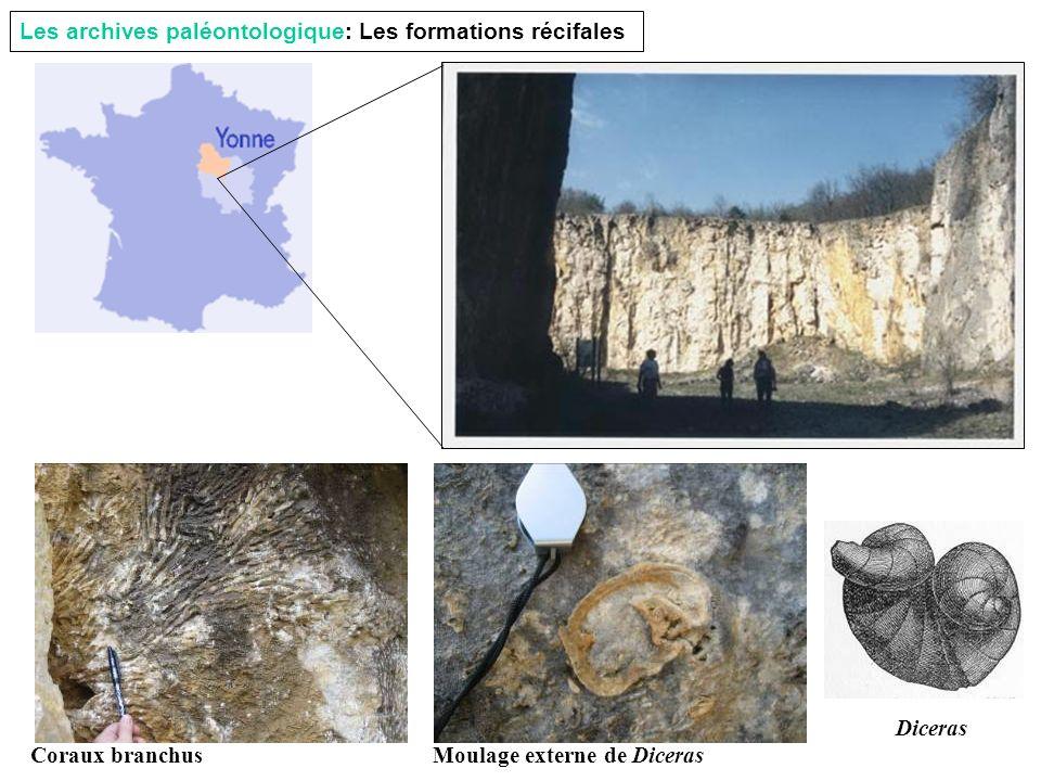 Les archives paléontologique: Les formations récifales