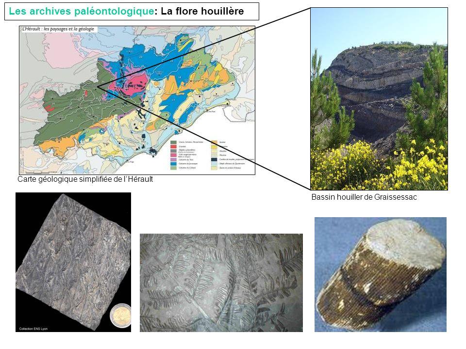 Les archives paléontologique: La flore houillère