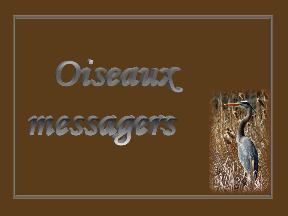 Oiseaux messagers