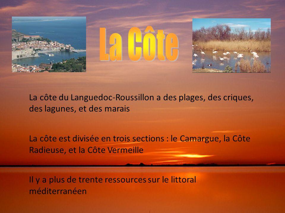 La Côte La côte du Languedoc-Roussillon a des plages, des criques, des lagunes, et des marais.