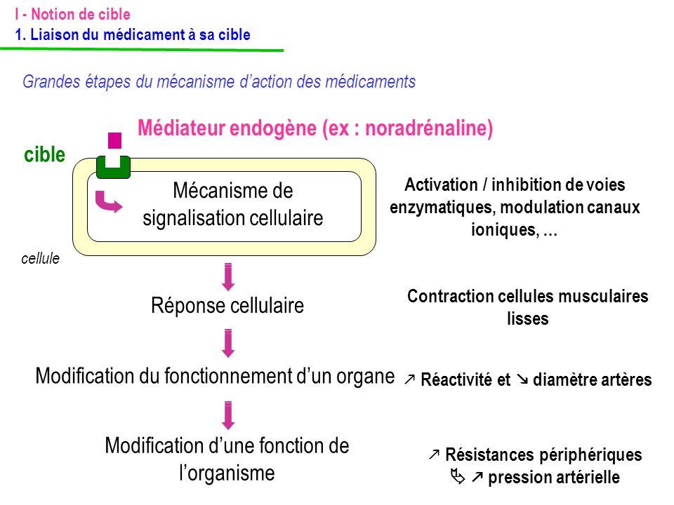 Médiateur endogène (ex : noradrénaline) cible