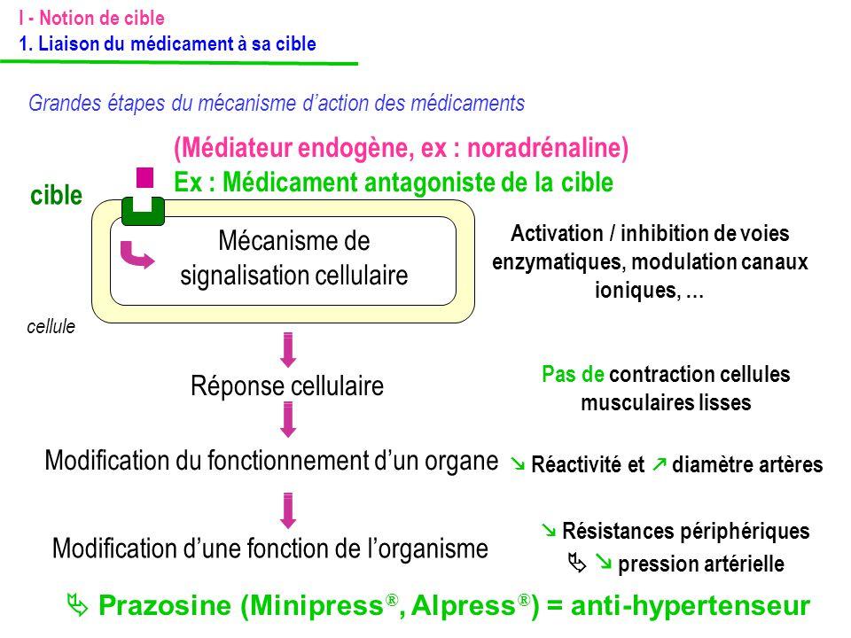 (Médiateur endogène, ex : noradrénaline)