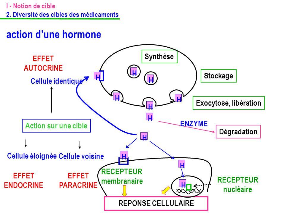 action d'une hormone Synthèse EFFET AUTOCRINE H H Stockage