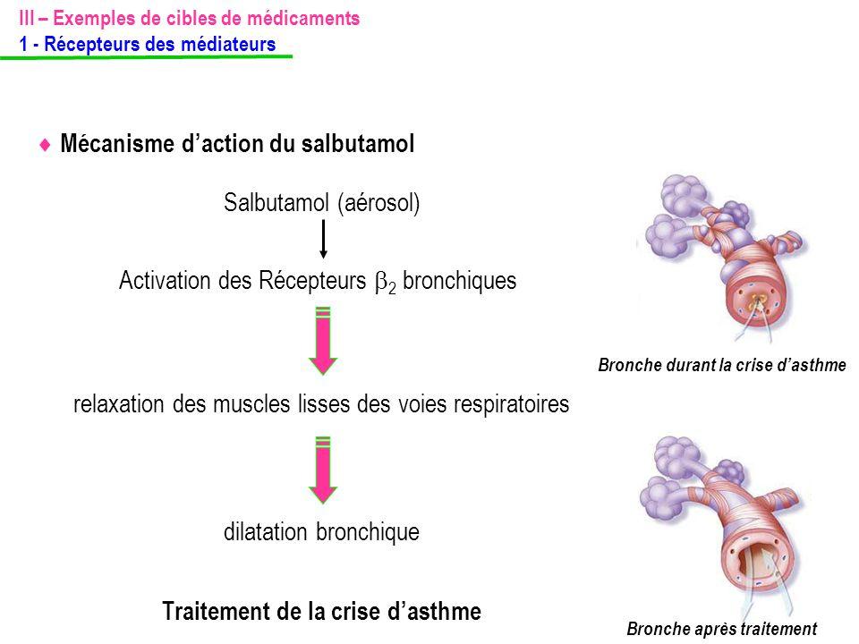 Bronche durant la crise d'asthme Bronche après traitement