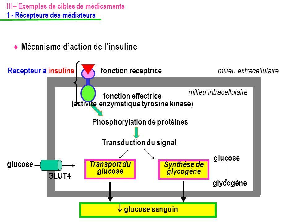 (activité enzymatique tyrosine kinase)