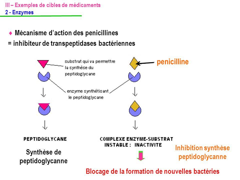 penicilline = inhibiteur de transpeptidases bactériennes