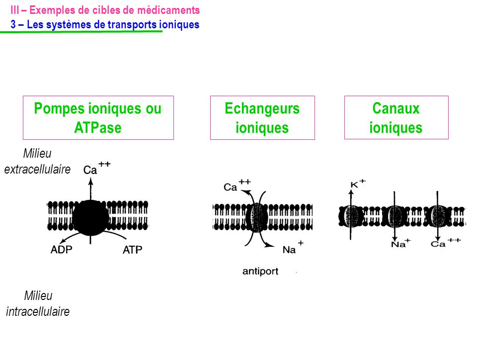 Pompes ioniques ou ATPase