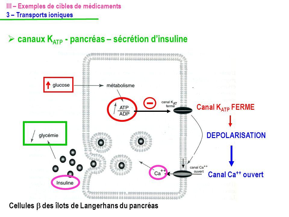 -  canaux KATP - pancréas – sécrétion d'insuline Canal KATP FERME