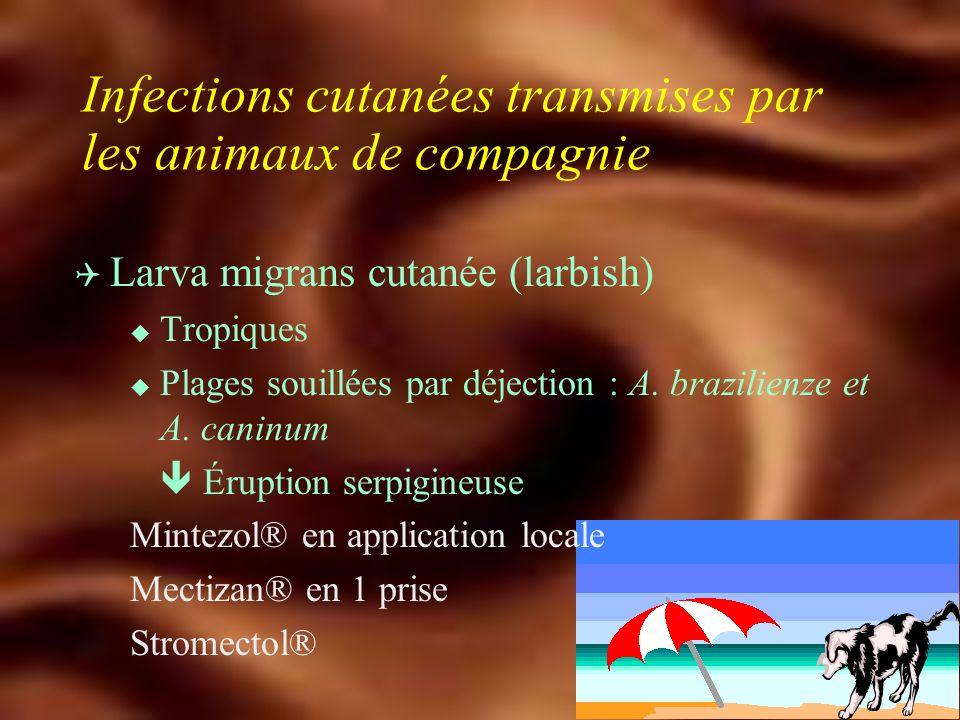 Infections cutanées transmises par les animaux de compagnie
