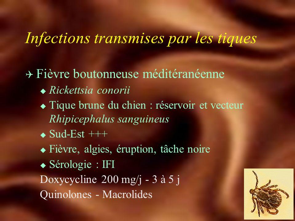 Infections transmises par les tiques