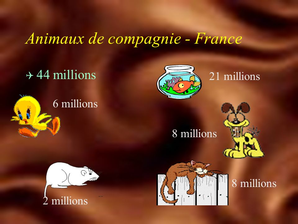 Animaux de compagnie - France
