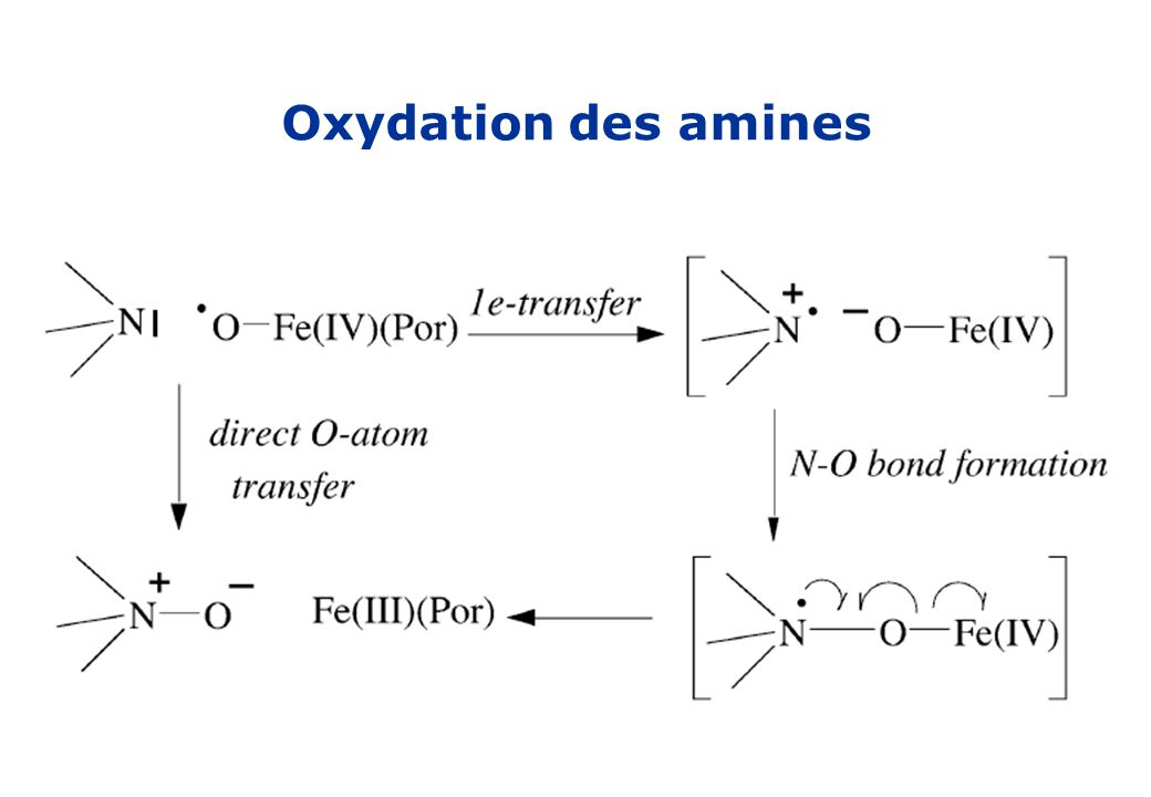 Oxydation des amines